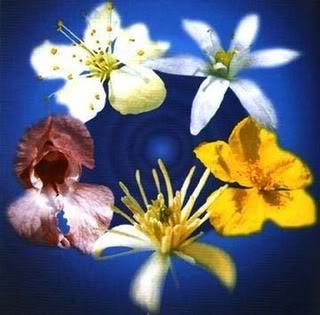 fiori-di-bachRescueRemedy.jpg