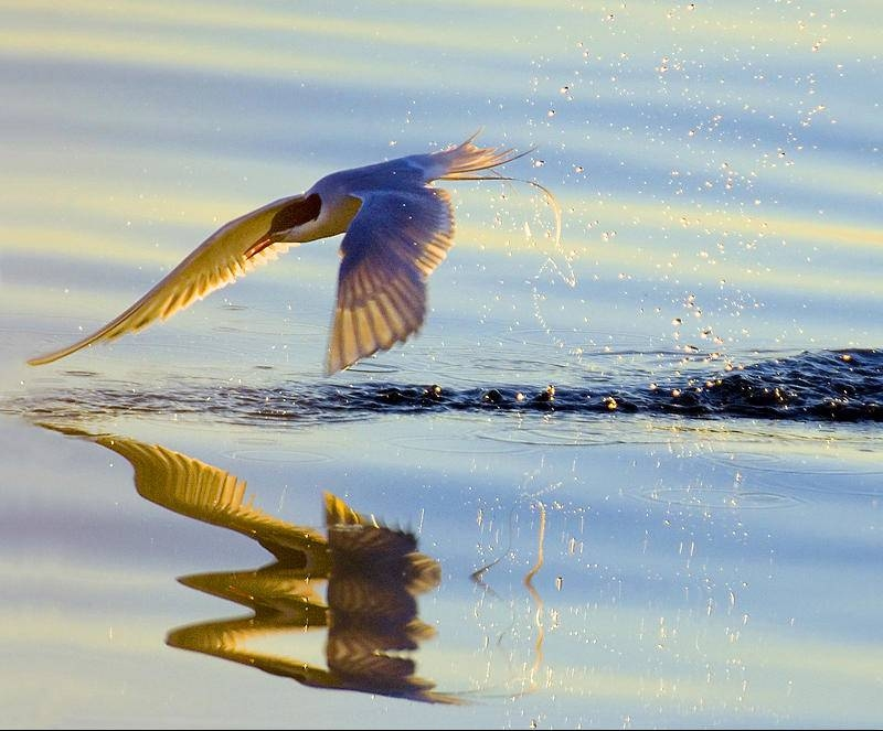 specchio d'acqua