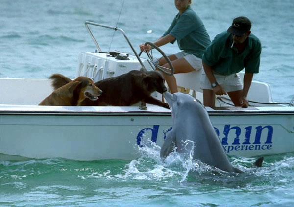 cane-delfino